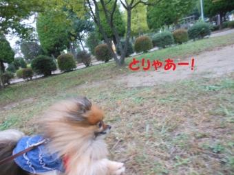 4_20141015191006b28.jpg