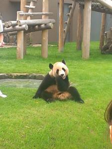 和歌山のパンダ