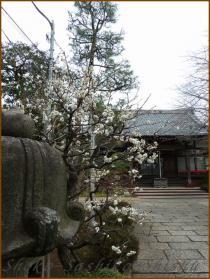 20130228 2早稲田 梅