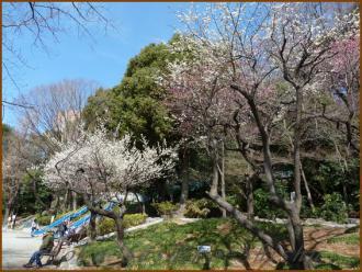 20130228 江戸川橋公園 梅