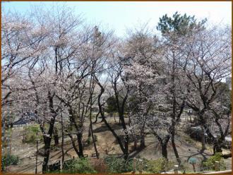 20130322 3 頂上 箱根山