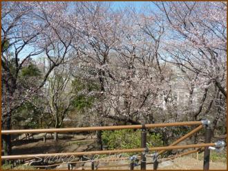 20130322 4 頂上 箱根山