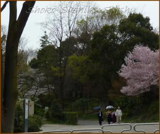 20130325 桜の木の下 W卒業式