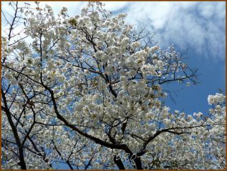 20130329 空と桜