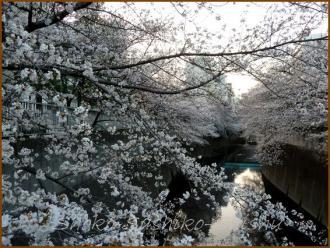 20130329 桜神田川 2