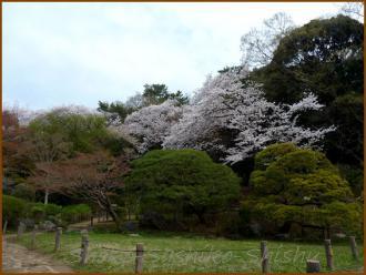20130329 新江戸川橋公園 2