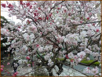 20130331 花桃 春の花