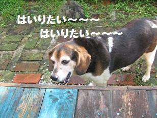 006_20120821221026.jpg