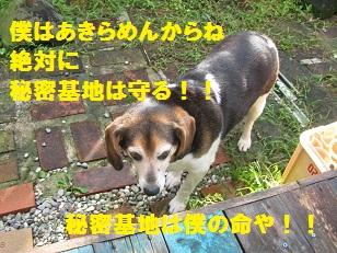009_20120820215948.jpg