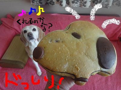 DSC02454satoblog.jpg
