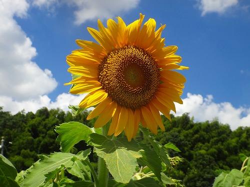 DSC02708satoblog.jpg
