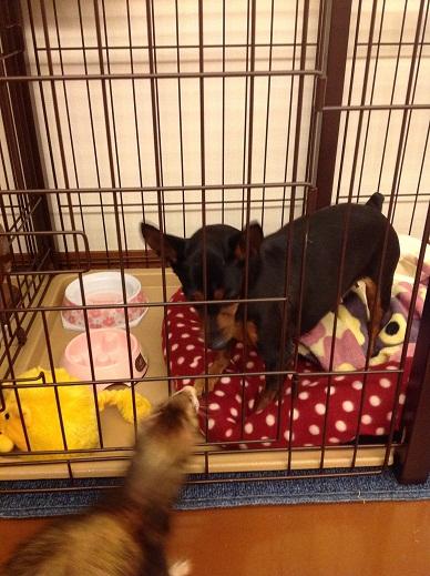 フィレットと保護犬のお見合い