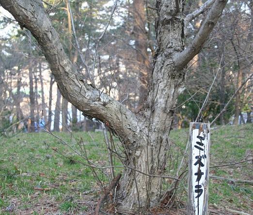 160 20120407 mizunara tori 20per