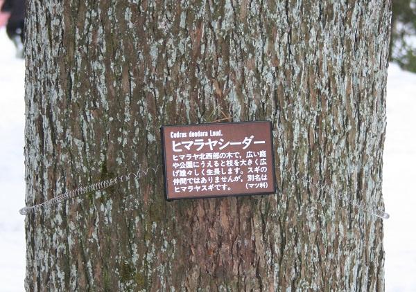167 20130202 himarayasiidaa tori 35per