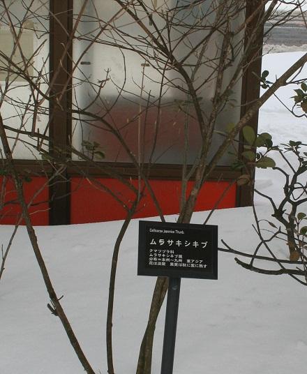 murasakisikibu 20130222 113 2 tori 40per