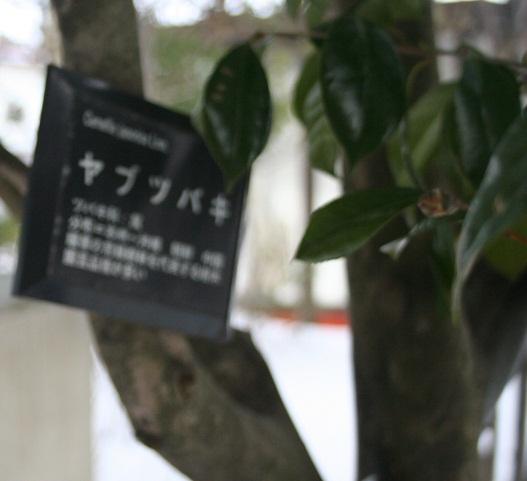 yabutubaki 20130222 061 1 tori 40per