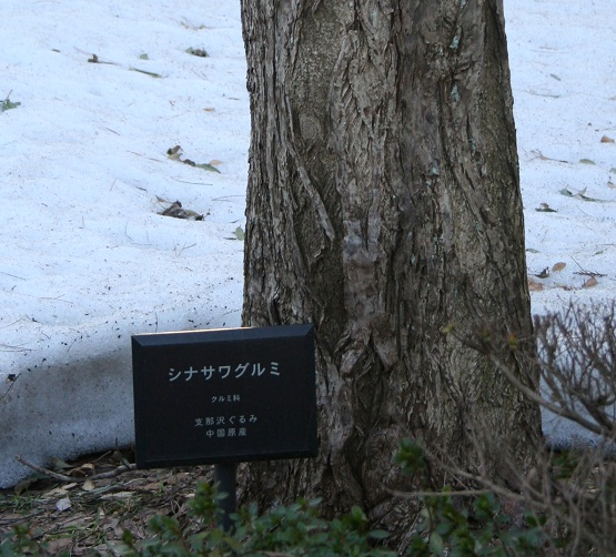 sinasawagurumi 20130308 376 turuoka tori 30per