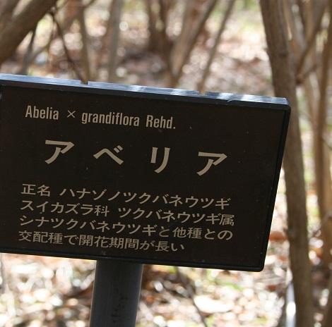 aberia 20130324 051 tori 25per