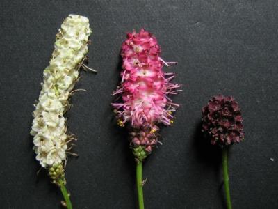 花穂の比較