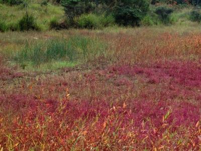 溜池畔の紅葉