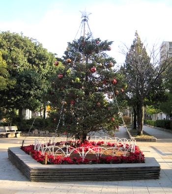 もみの木2