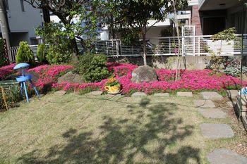 芝桜ブログ用