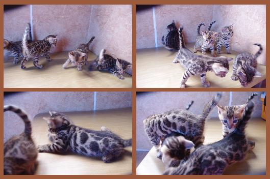 2012 Kitten  11月