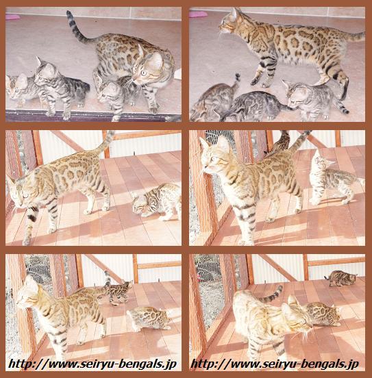 12012 Kitten 11月 野外