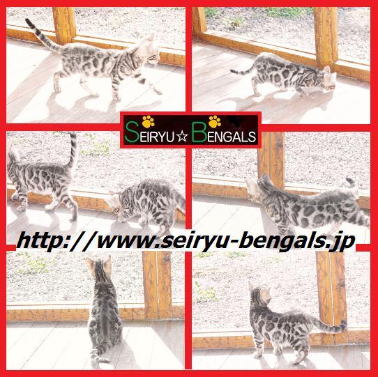 2012 Kitten 12月野外1