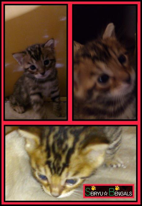 2012 Kitten 12月誕生