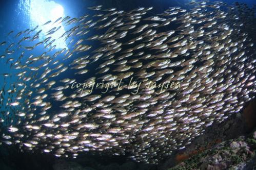 20110826_MG_3674_20120626184039.jpg