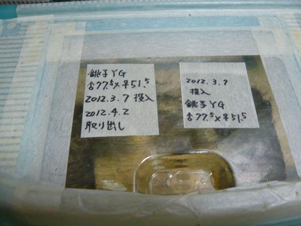 銚子YG産卵セット