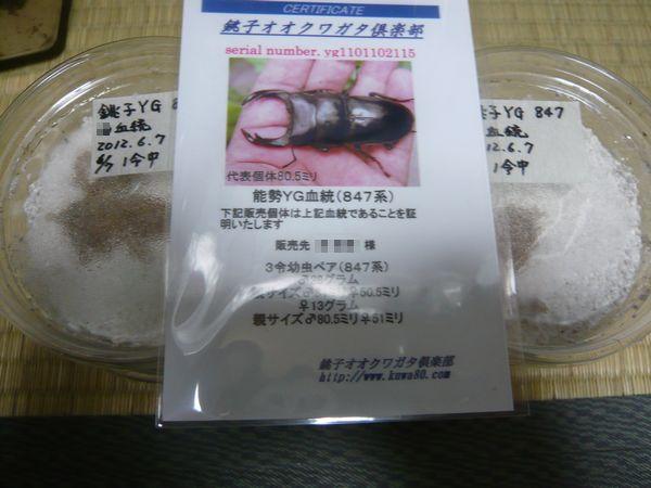 銚子YG一時保管菌糸