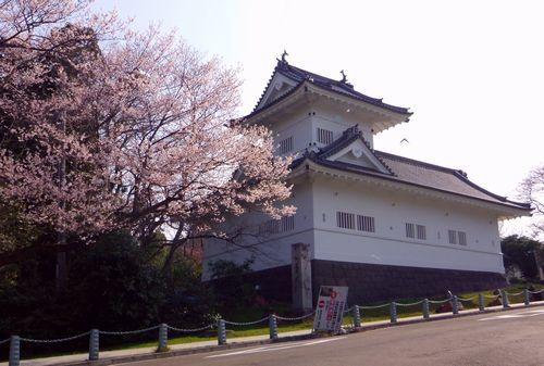 桜2013青葉城脇櫓1