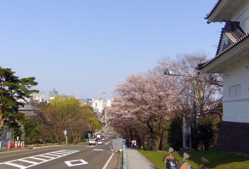 桜2013青葉城脇櫓2