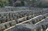 桜2013青葉城脇櫓4