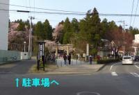 桜2013東照宮5