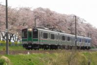 桜2013一目千本桜7船岡東北本線