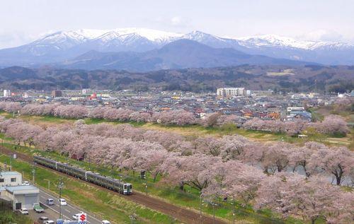 桜2013一目千本桜11船岡城跡公園展望台
