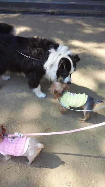 2014105大型犬とラピス
