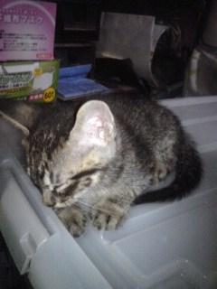 Sさんち子猫3