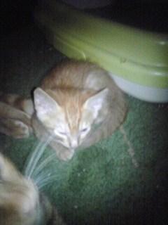 Sさんち子猫2