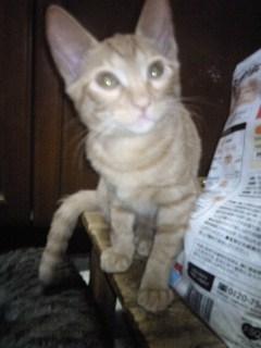 鈴木猫茶3