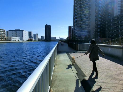 川沿いの散歩道
