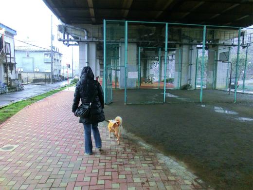 濡れない散歩