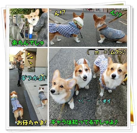 お散歩デビュー4