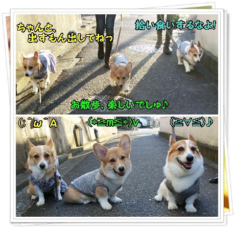 お散歩デビュー3