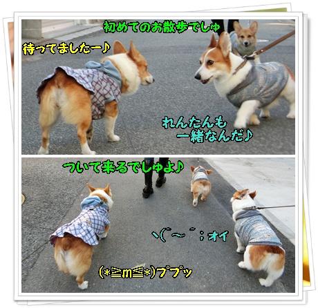 お散歩デビュー1