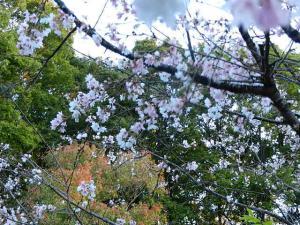冬桜 城峯公園