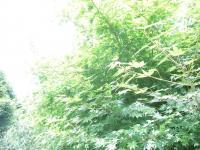 散歩6DSCN2989_convert_20120630143348